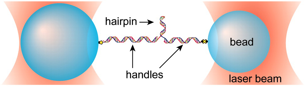 A schematic of a DNA hairpin assay